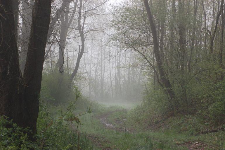 foggy woods_s
