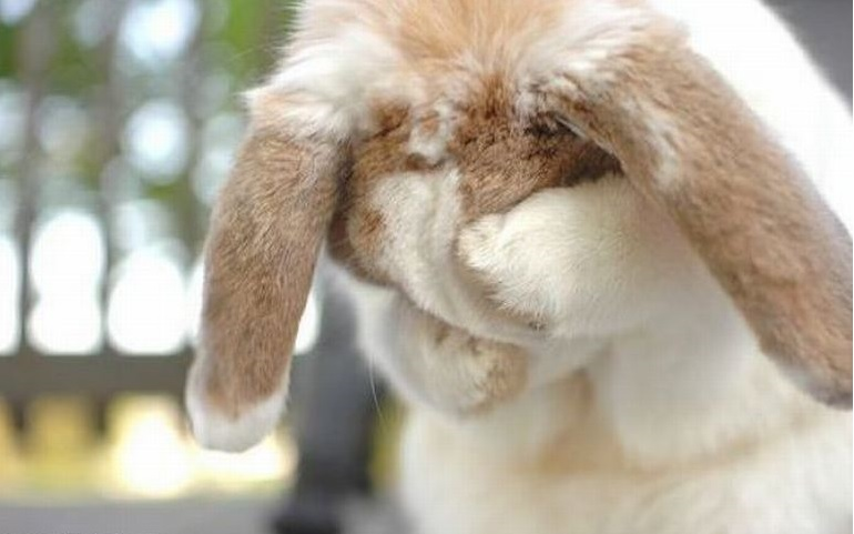 """Sevimli tavşan sorduğuna soracağına pişman olmuştu."""