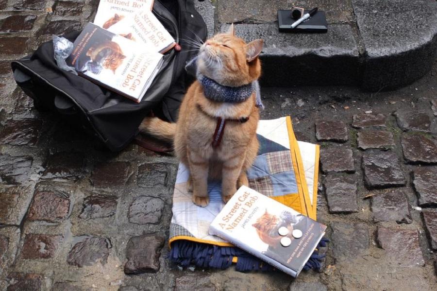Ünlü olduğunun farkında olan Sokak Kedisi Bob kitaplarıyla poz verirken