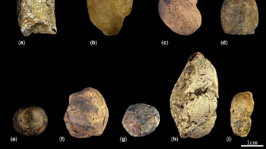 fosilleşmiş kaka örnekleri